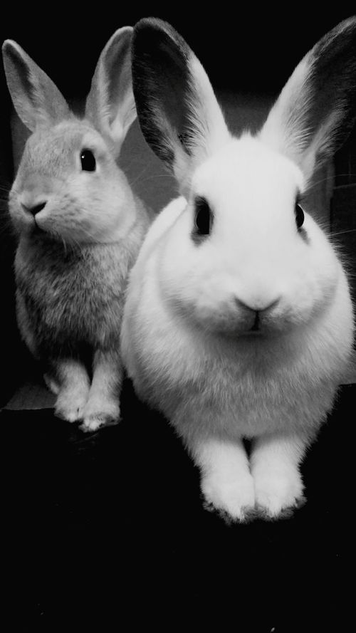 My little models 🐰 Pets Adorable Family❤ Big Ears Cute Pets FLUFFY BUNNY Bunny 🐰 Love ♥ Animals