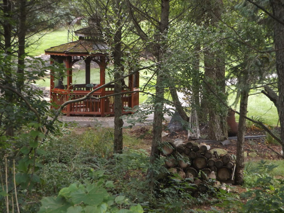 Gazebo Life Gazebo Gazebo View Gazebo And Nature Wood Pile Wood Pile And Trees Color Palette