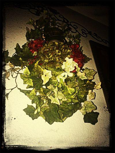 Flowers No post code envy. Lorde Enjoying Life