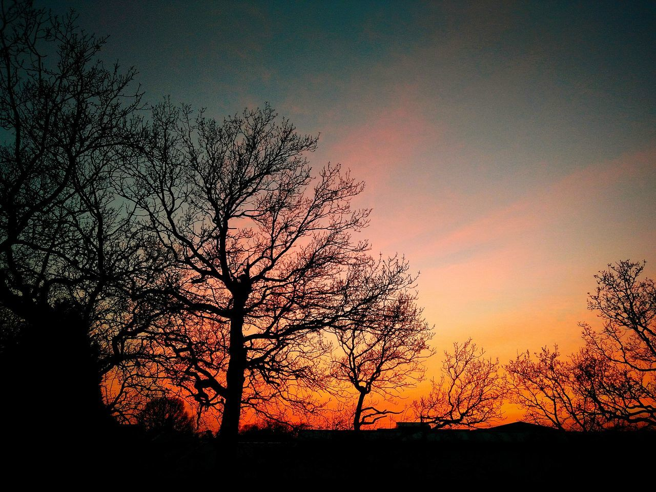 sunset, silhouette, tree, beauty in nature, nature, tranquility, orange color, bare tree, scenics, sky, tranquil scene, landscape, outdoors, no people, branch, lone
