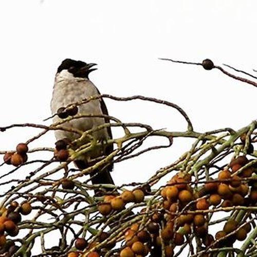 Where is my friends... Birds Birding Birdporn Birdsofinstagram Best_birds Best_nature Bird_of_instagram