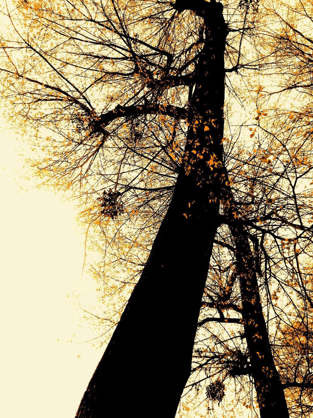 Tree, ymo yvan moallic Light And Shadow Trees New Reality Hello World Wien YMO Impressionism