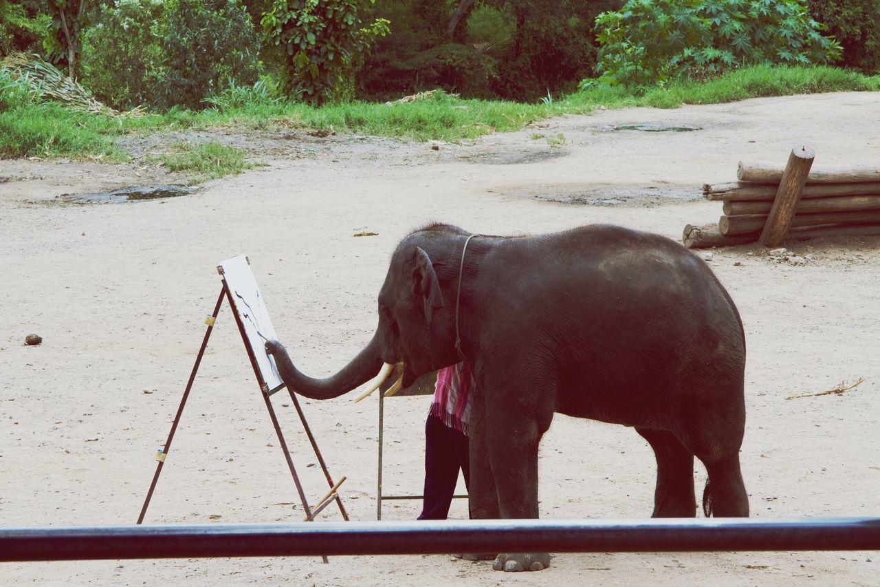 Éléphant entrain de dessiner. A Chiang Mai - Thaïllande Nature Elephant Chiang Mai Thaïlande