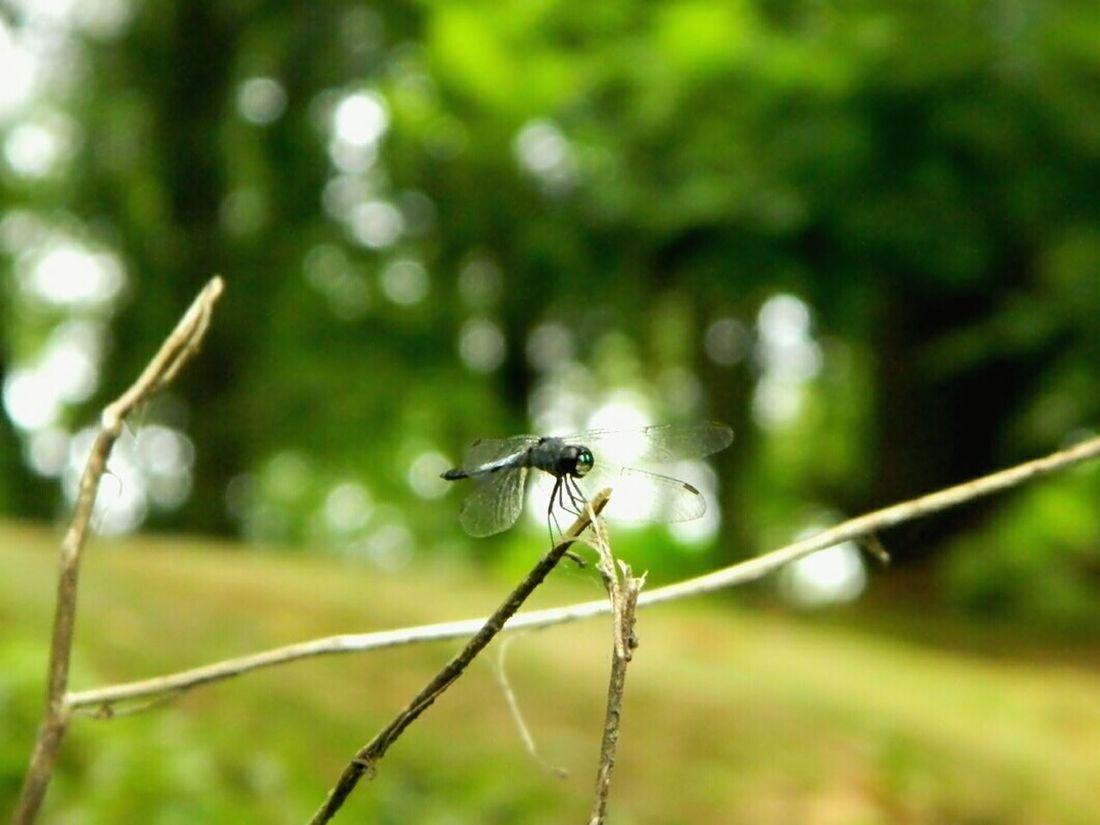 Dragonfly My Dragonfly Photo Nature EyeEm Bangladesh EyeEm Dragonfly EyeEm Nature Lover Nature_collection Macro Macro Photography