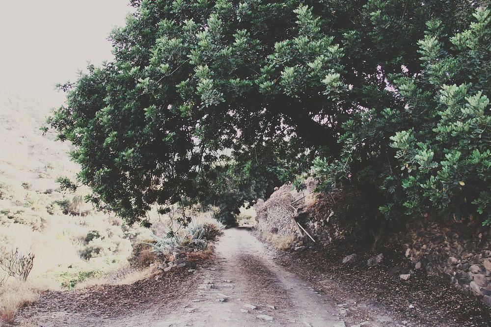 Nature Tree Outdoors First Eyeem Photo
