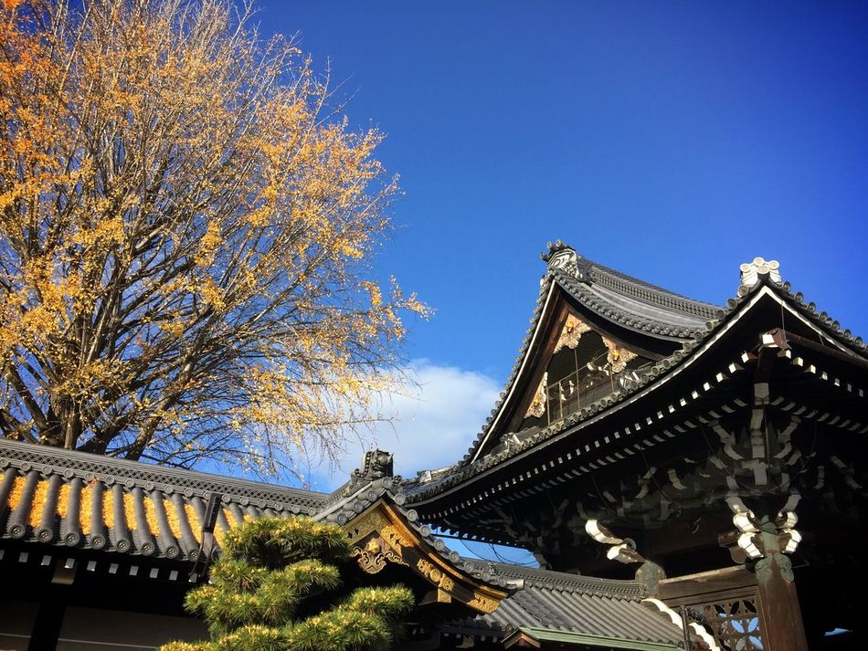 Nishi-Hongwan-ji Temple in Kyoto Buddhism Architecture Traveling Kx2014