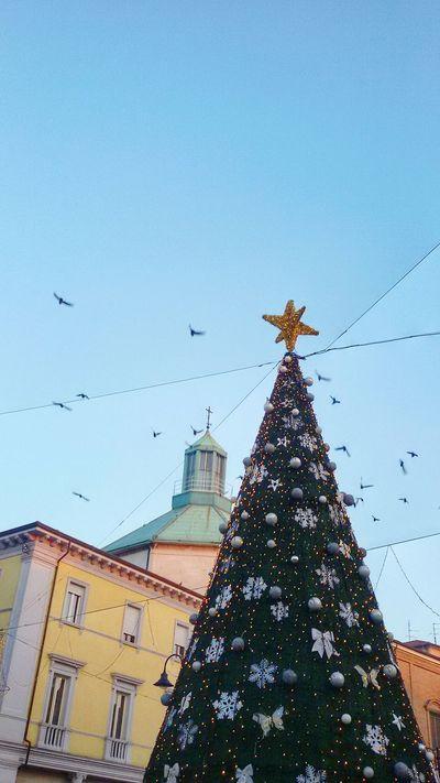 Christmas Tree Christmas Built Structure Flying Bird Building Exterior Christmas Decoration Sky Architecture Celebration Outdoors Day Cellphonepics Cellclick Cellphonephotography Cellphone Camera Cell Phone Photography Rimini2016 Rimini, Italy Christmas City Life City Street Celebration Lighting Equipment Christmas Lights