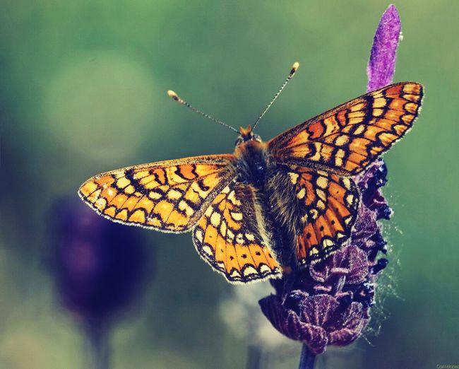 Papillon Libre Como El Viento Nature Photography