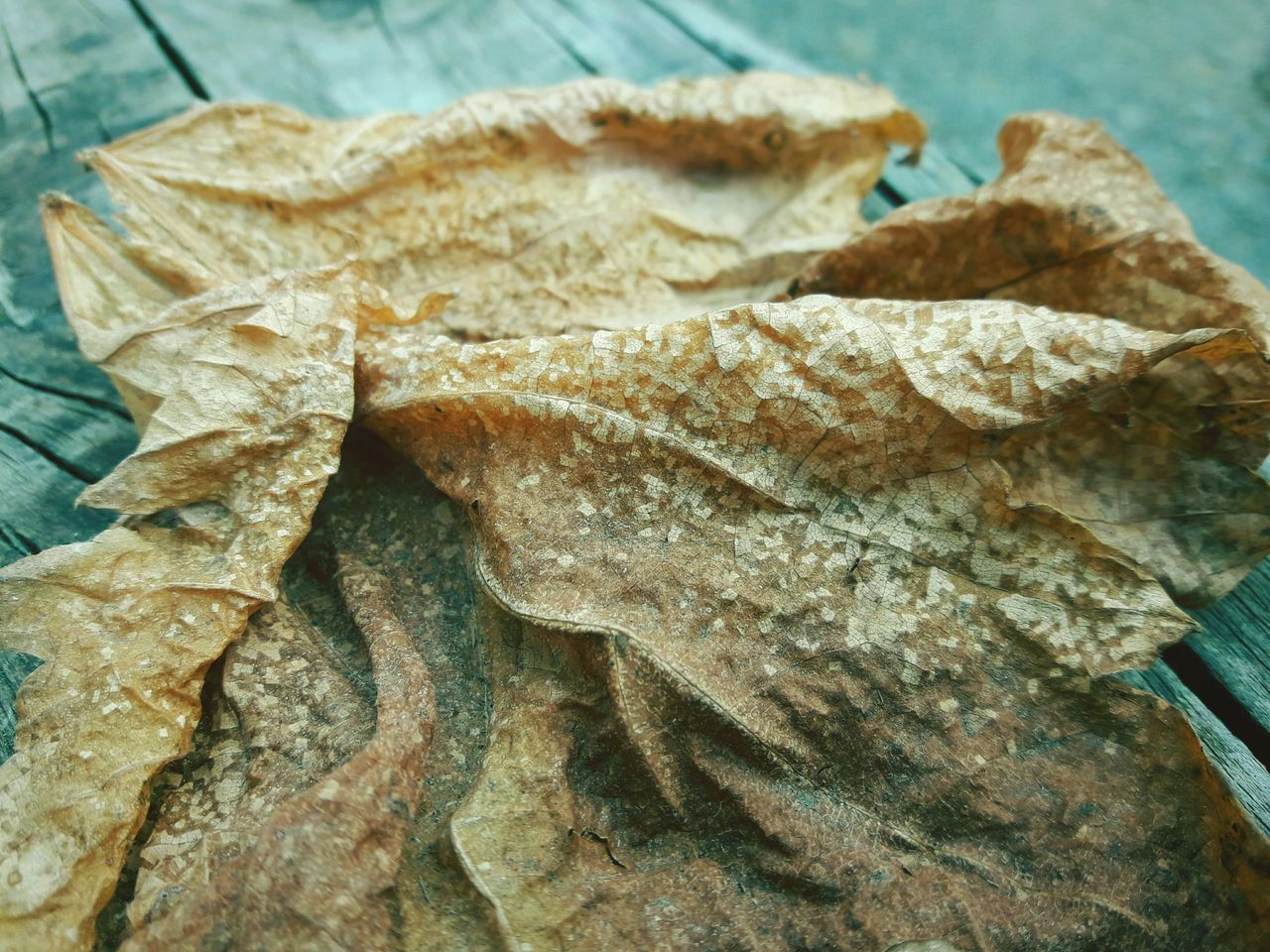 leaf, no people, close-up, large group of objects, day, outdoors, nature
