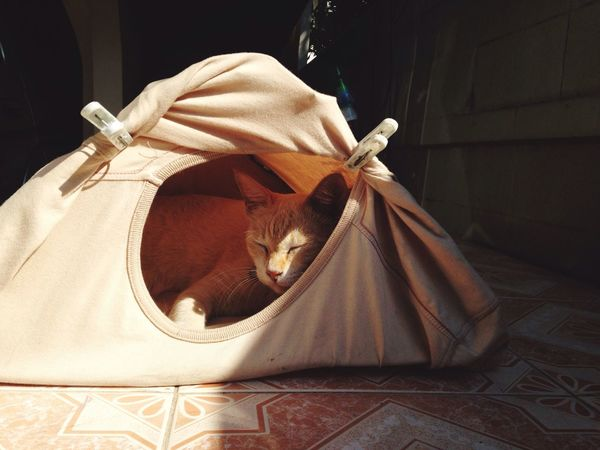 DIY Cat's house Thai Street Cat Cat House Diy Tent T-shirt Diy IN THE House White Cat Morning Sleepy Bangkok Thai Cat