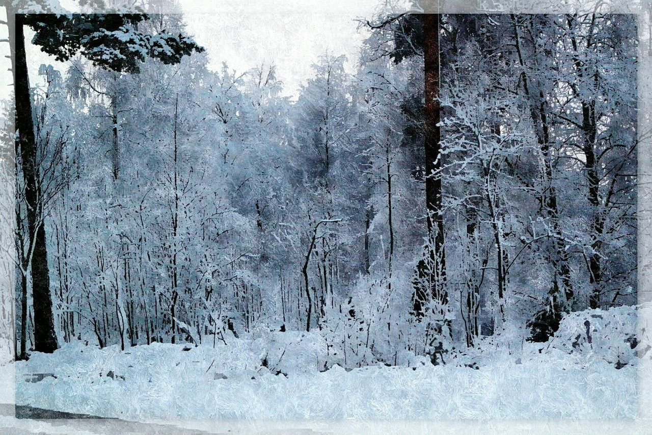 Artphotography November Atmosphere Snow Open Your Eyes Beautiful Nature Iced December