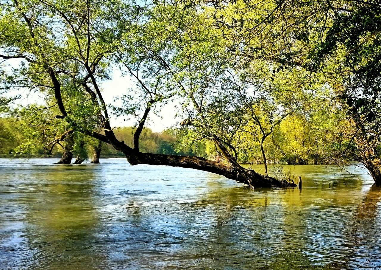Hochwasser Auwald Rhein Rheinufer Mannheim Naturschutzgebiet Water River Mangrove Mangroven Urwald Auwald Und Wiese Rhine River Baum Im Wasser Tree In The Water Rheinauhafen Nature_collection Nature Photography Great Atmosphere Wanderlust Naturelovers Nature_perfection Naturephotography Rhein💫