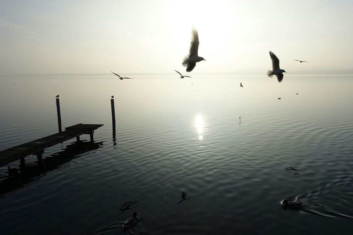 Moin Moin... :) Landscapes With WhiteWall Capturing Freedom Good Morning Sunlight Birds Müggelsee