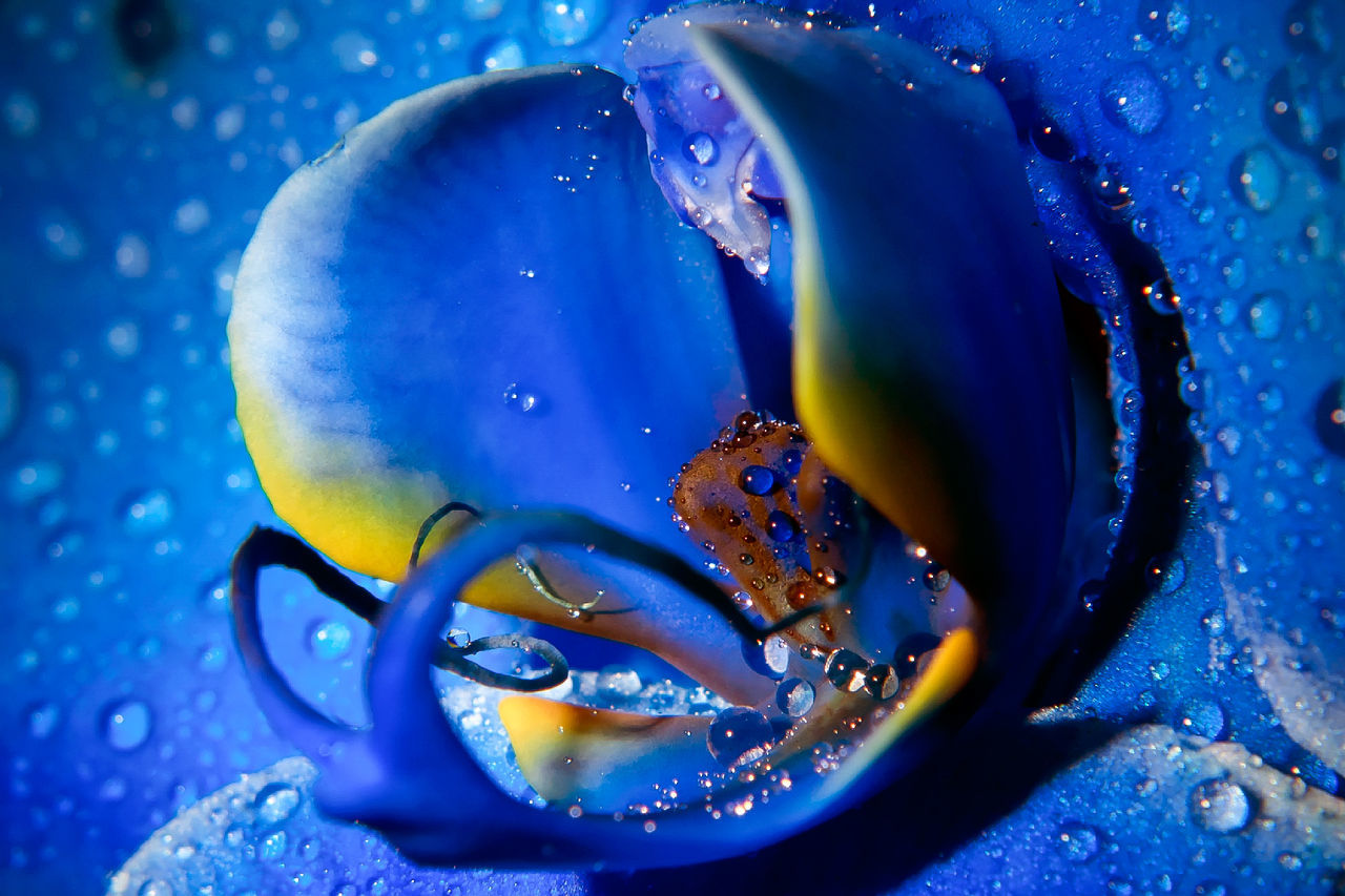 Abstract Backgrounds Close-up Detail Drop Droplet Elégance Focus On Foreground Freshness Full Frame Glass Ideas Macro Marcokleinphotography Orchid Purity Rain RainDrop Selective Focus Shiny Transparent Water Wet Blue Wave