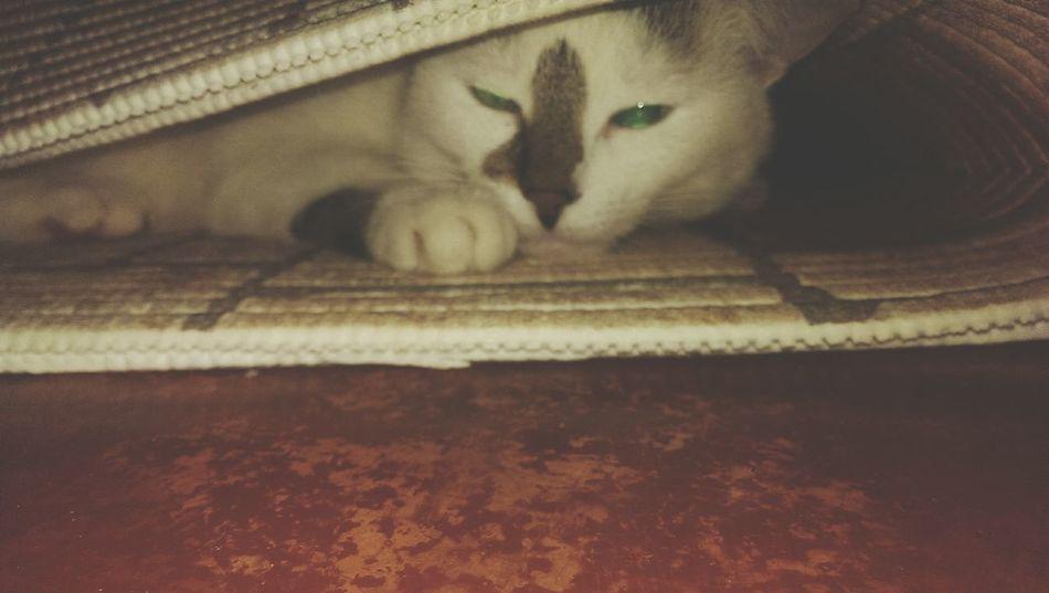 Cat♡ Днепропетровск