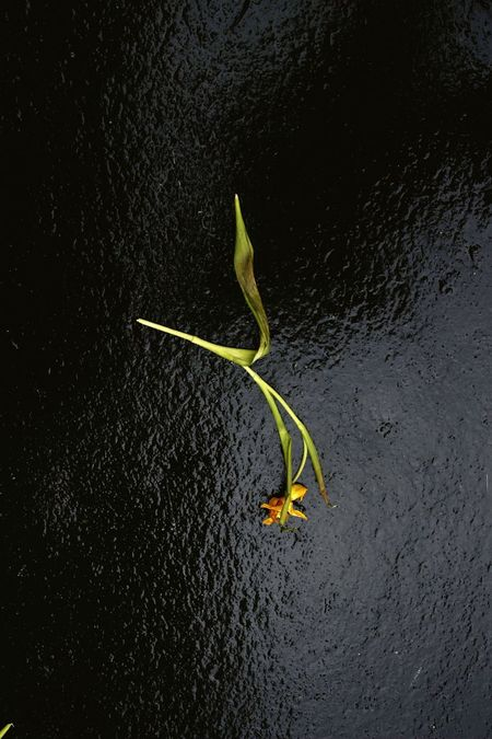 Jonquille Bitume Streetphotography Street Fleurs Flowers Jaune Plants Alone Lieblingsteil