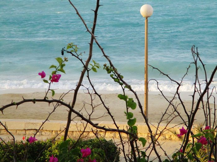 Northcoast Flowers Lamp Seaside Beauty In Nature
