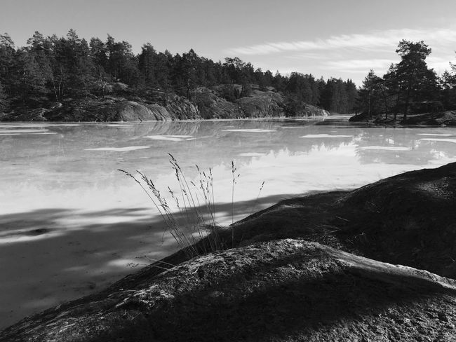 Spring EyeEm Best Shots Eye4photography  Black And White Blackandwhite Monochrome Bw_collection Nature_collection