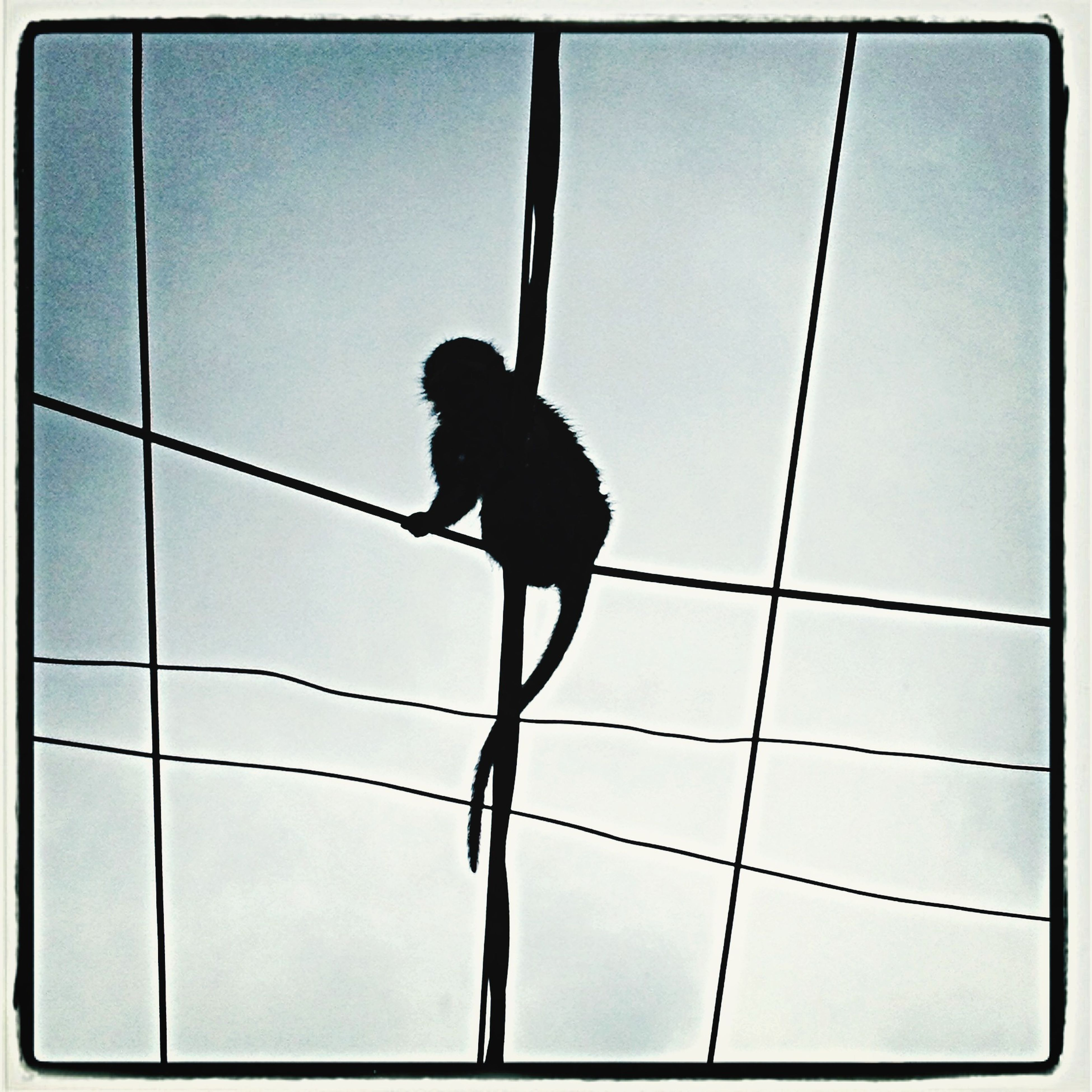 animal themes, one animal, low angle view, full length, transfer print, bird, silhouette, auto post production filter, wildlife, animals in the wild, perching, day, indoors, no people, black color, standing, rear view, sky, pole