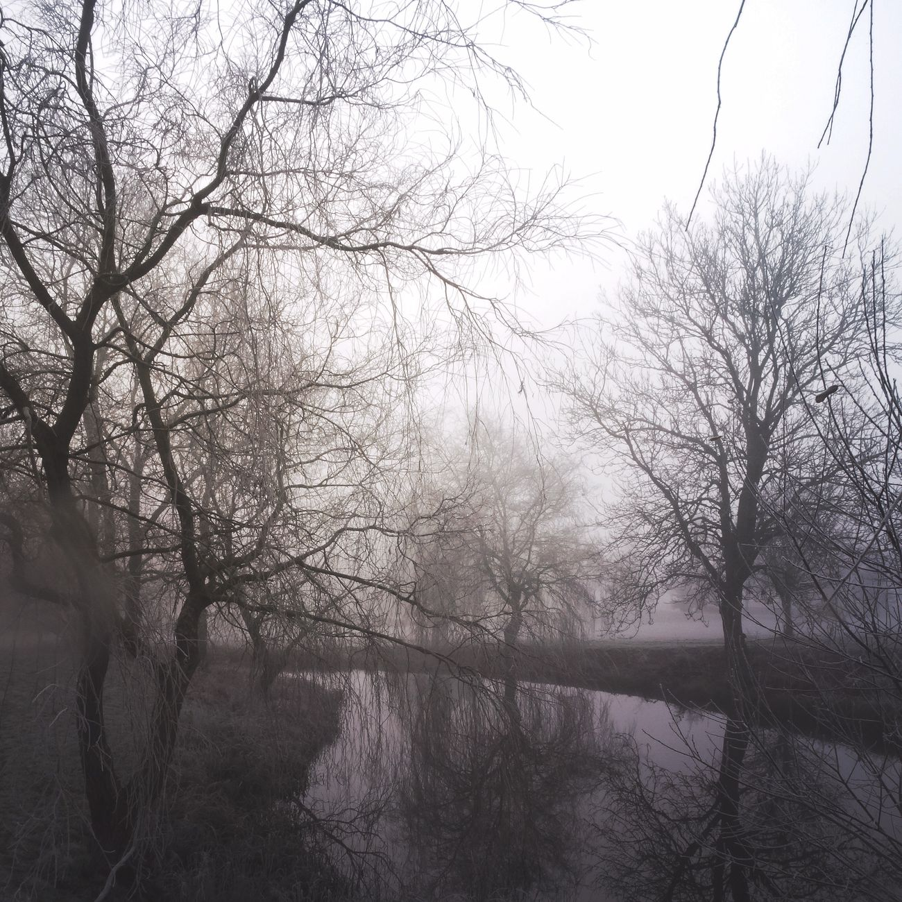 Bare Tree Nature Fog Tranquility Beauty In Nature Tree Outdoors