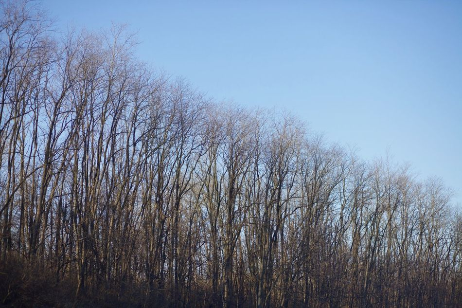 Bare Tree Blue Clear Sky Day Growth Landscape Nature Remote Tranquil Scene Tree WoodLand