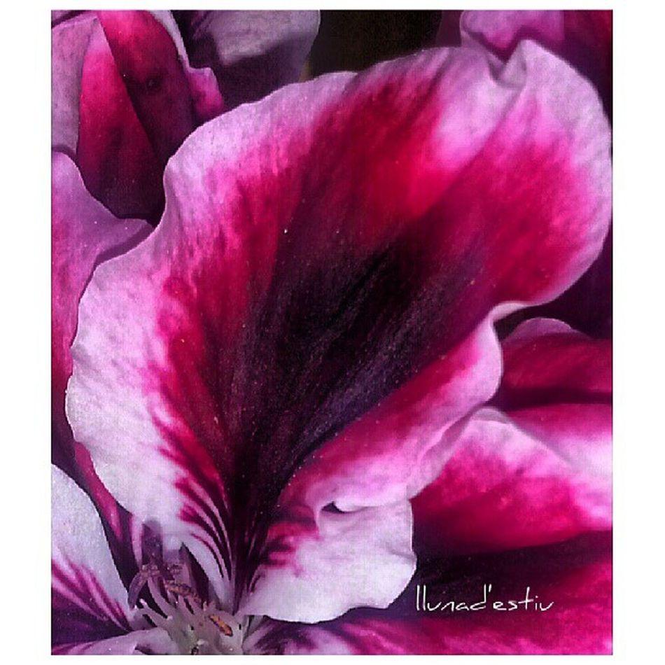 BONA TARDA!! Macro_captures Macro_admirer Floral_lover Flowerstalking floral_perfection vivir_to2_nature gf_featured gang_family vivir_to2 catalunya natura_catalunya flowerstalking flors flowerstarz