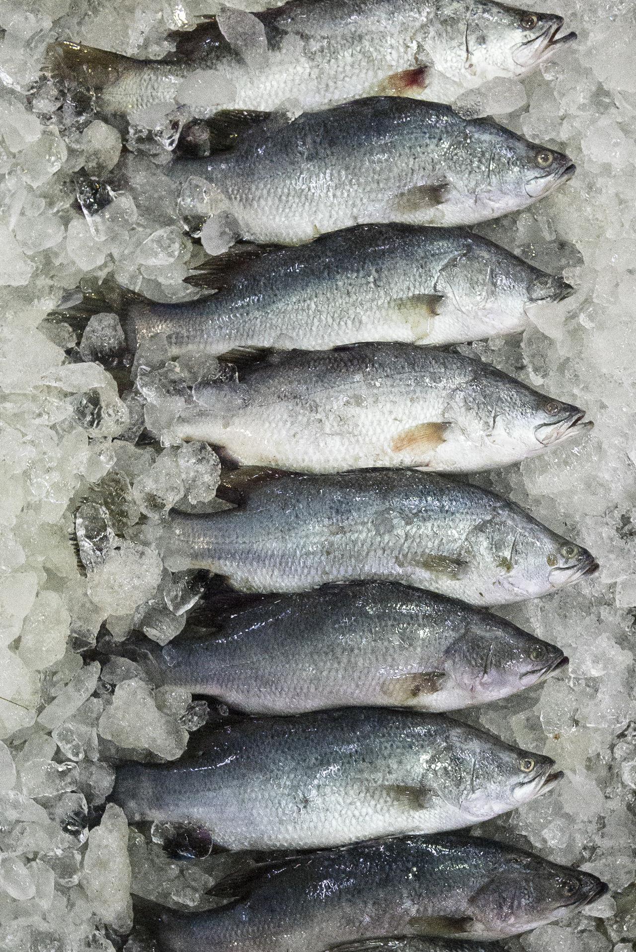 Beautiful stock photos of fish, Choice, Cold, Contemporary, Context