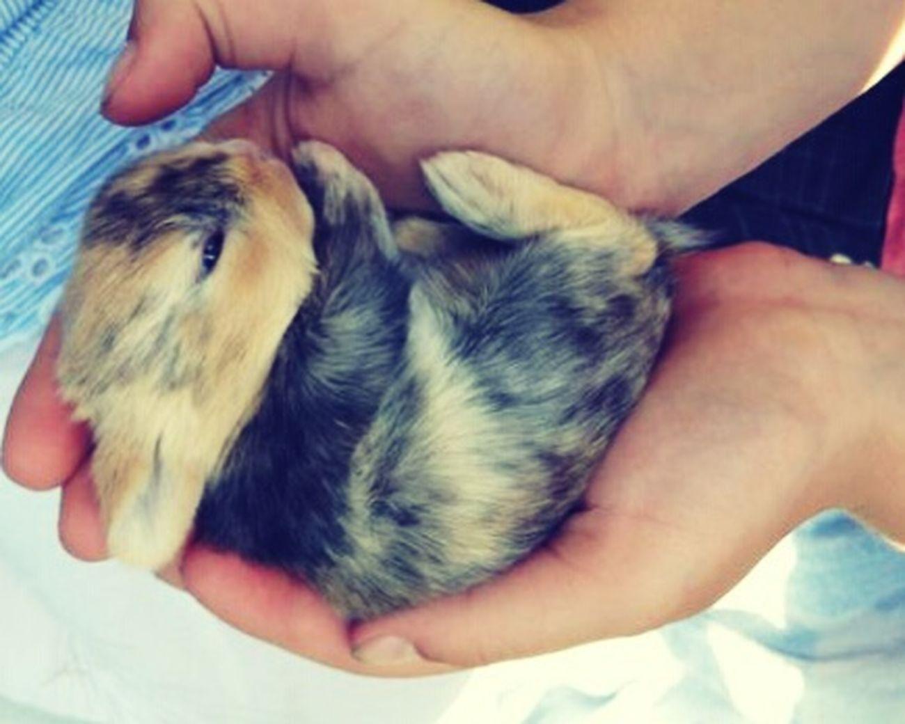 Winzig Klassiker Tiere BabyPet Hasi♥ Hasi Häschen Hasen Süß *__* Süßi :* Süßi❤️