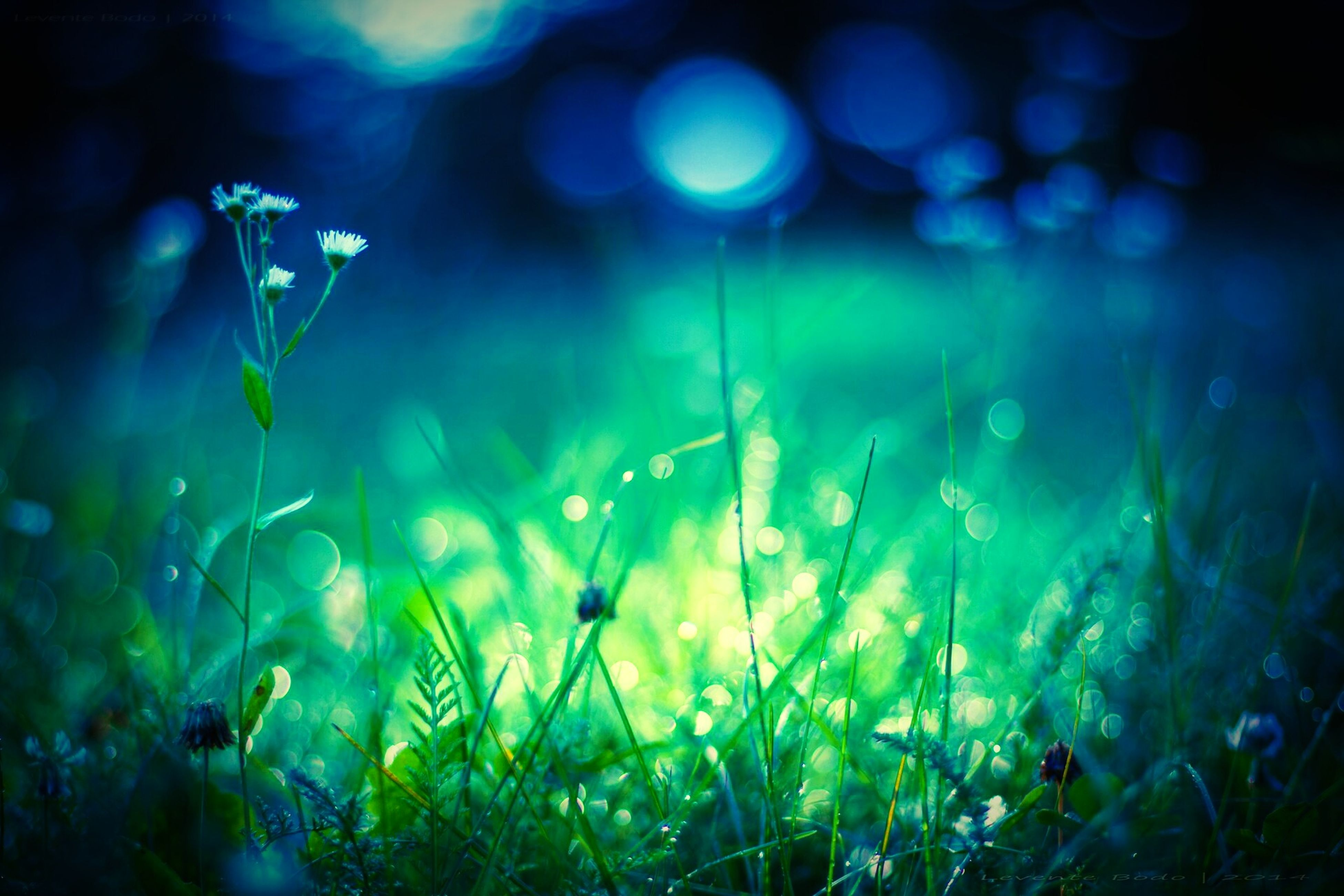 growth, plant, beauty in nature, field, nature, grass, focus on foreground, close-up, freshness, tranquility, selective focus, flower, night, fragility, growing, outdoors, stem, green color, no people, lens flare