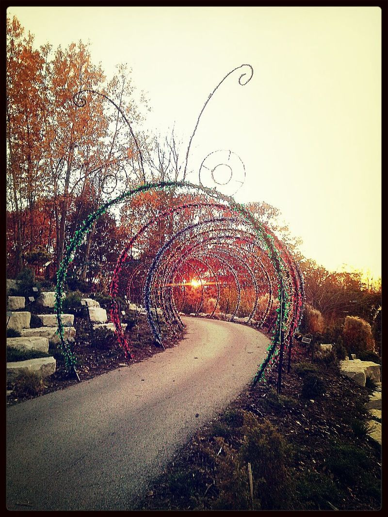 Caterpillar Garden Of Lights Winter Is Coming