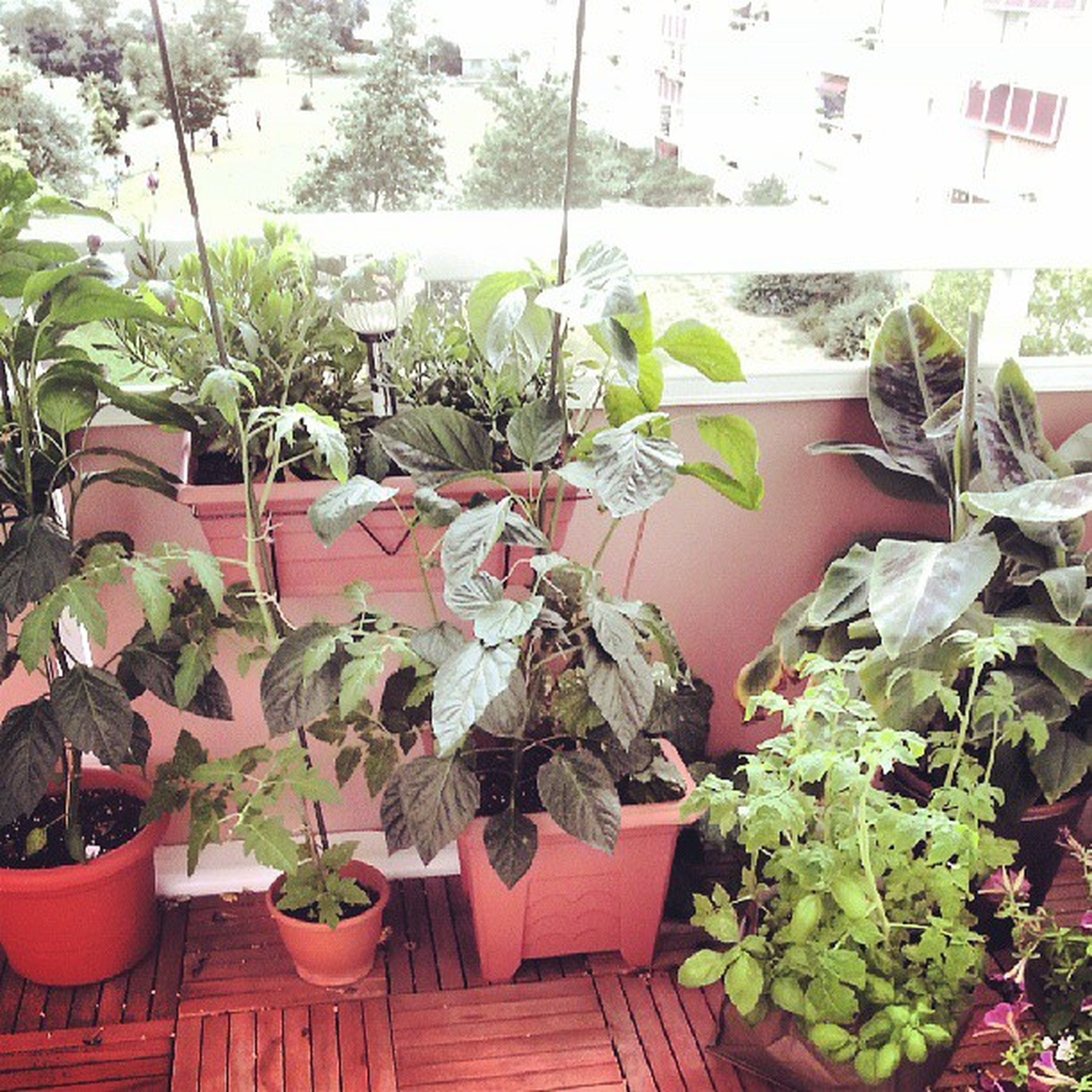 plant, potted plant, growth, leaf, flower, house, wall - building feature, built structure, architecture, green color, building exterior, day, no people, freshness, nature, flower pot, outdoors, wall, close-up, red