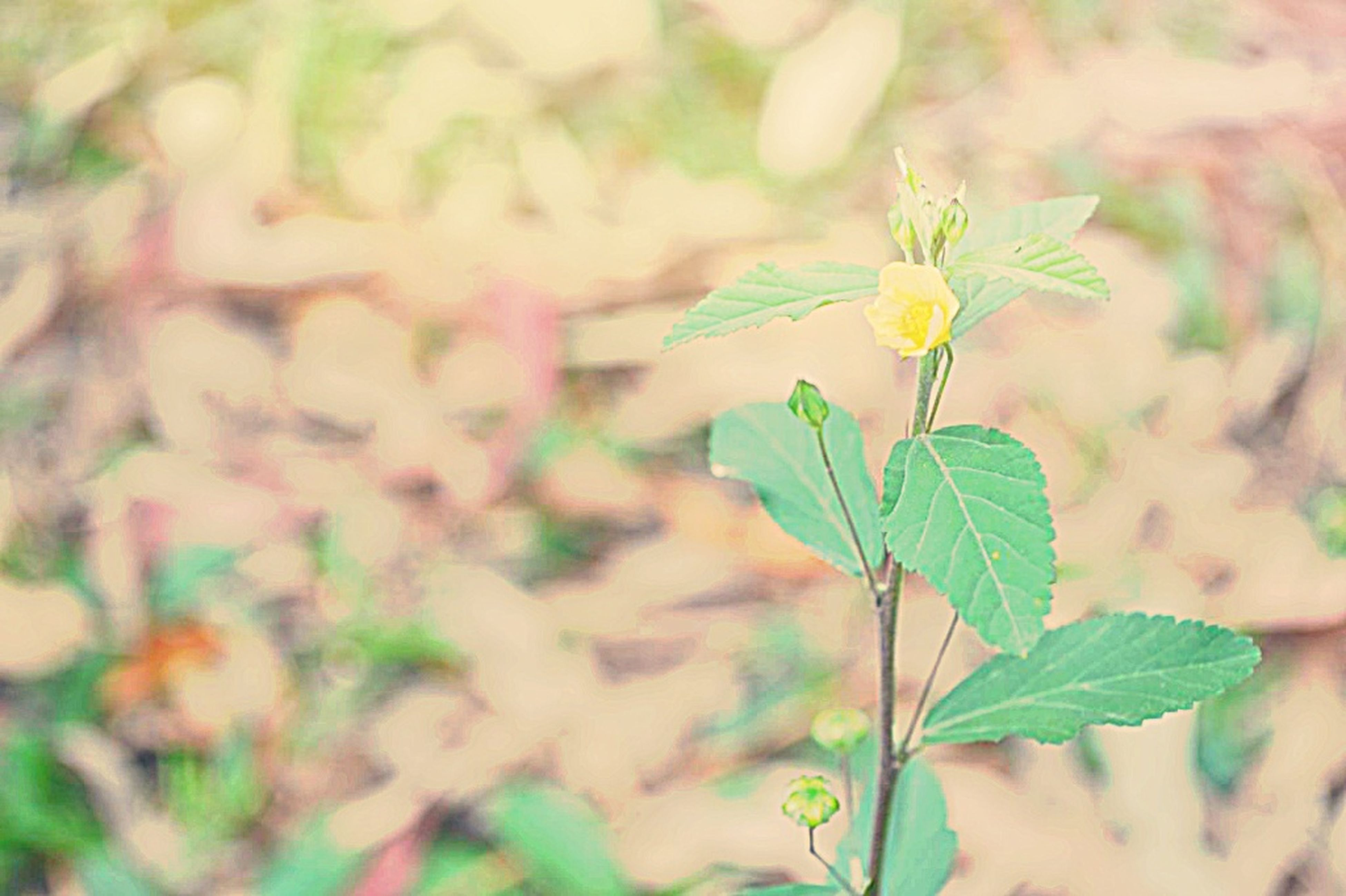 leaf, focus on foreground, plant, growth, close-up, stem, nature, green color, selective focus, flower, fragility, beauty in nature, freshness, outdoors, day, growing, bud, new life, twig, beginnings