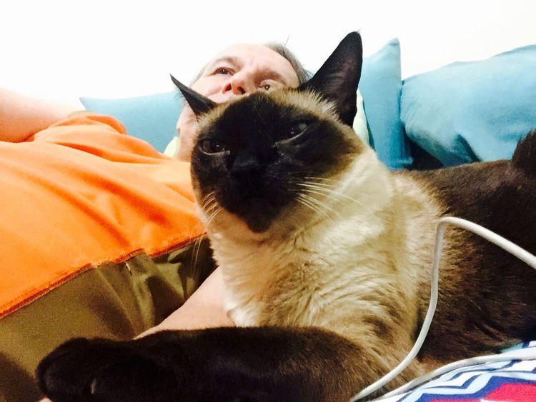 Love Cats I Love My Cats  Cat♡ Cat Hello World Brazil Lovecats❤️ I Love My Cat Brasil ♥