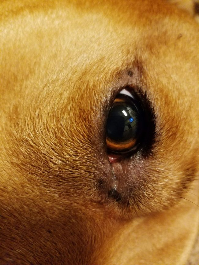 Eyes,pets,animals,dog,window to the soul,