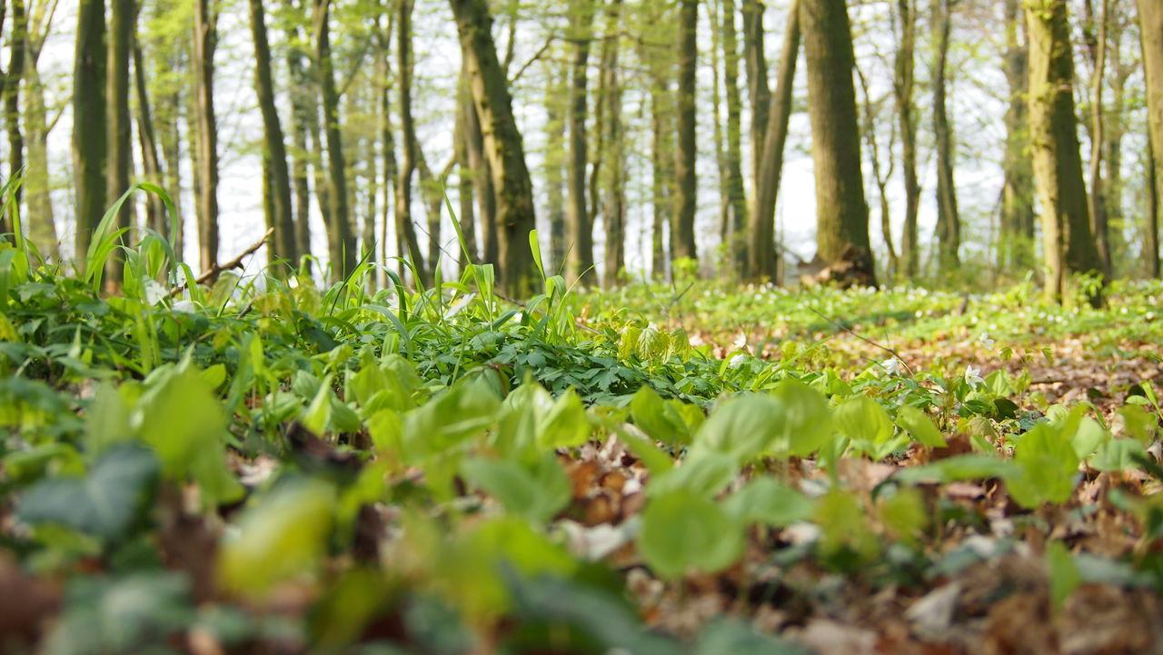 forest ground | EyeEm
