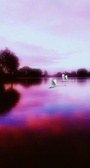 Swanlake Beautiful Nature Especially Made For My Romantic Friend! @Sandragoth