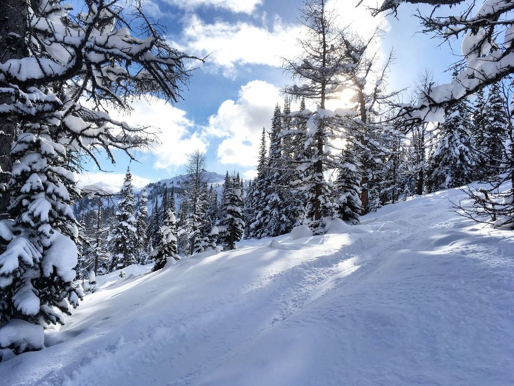 Winter Snow Tree Beauty In Nature Outdoors Forest No People Banff National Park  Canada Ski Snowboarding Fresh Tracks Sunblock Seethrough Relax Paradise Peace And Quiet Vacations Powder Adventure Quiet