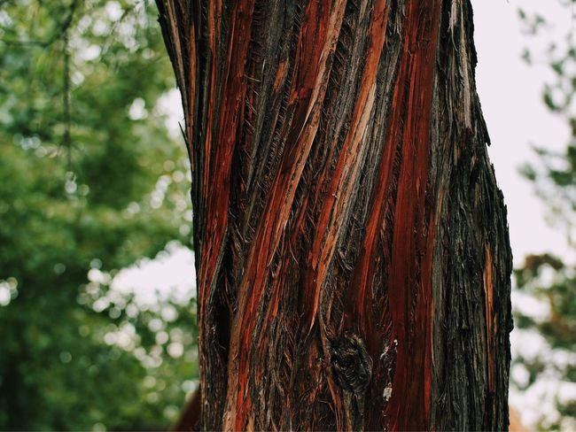 Twisted tree bark... Tree Tree Trunk My Favorite Photo Found On The Roll Vscocam Colorful Colour Of Life Color Palette What's On The Roll Beauty In Nature Close-up Nature Macro_collection Focus On Foreground Colors Of Nature Pivotal Ideas Color Splash Made In Romania Macro Beauty Details Of Nature Macro Nature Selective Focus