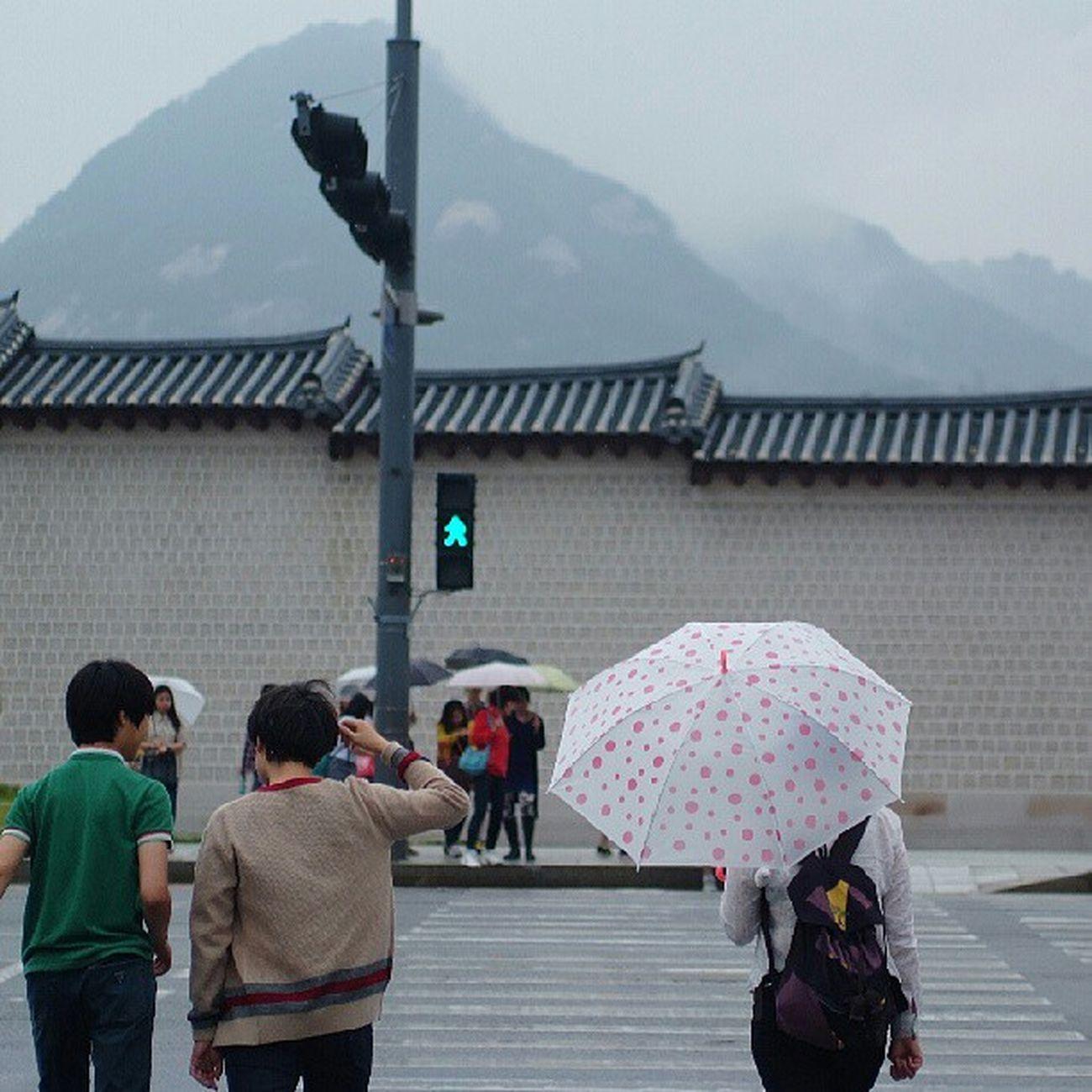 Robin_theme15 City of rain 올랑말랑해 광화문