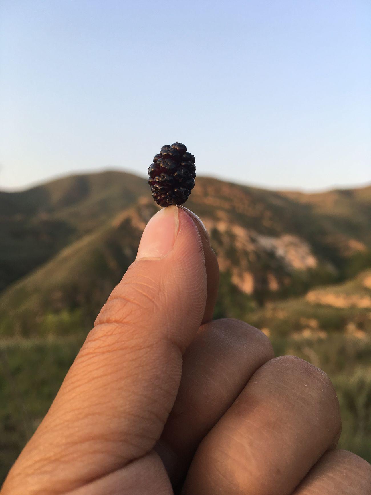 Wg 一个野桑葚和它的大山