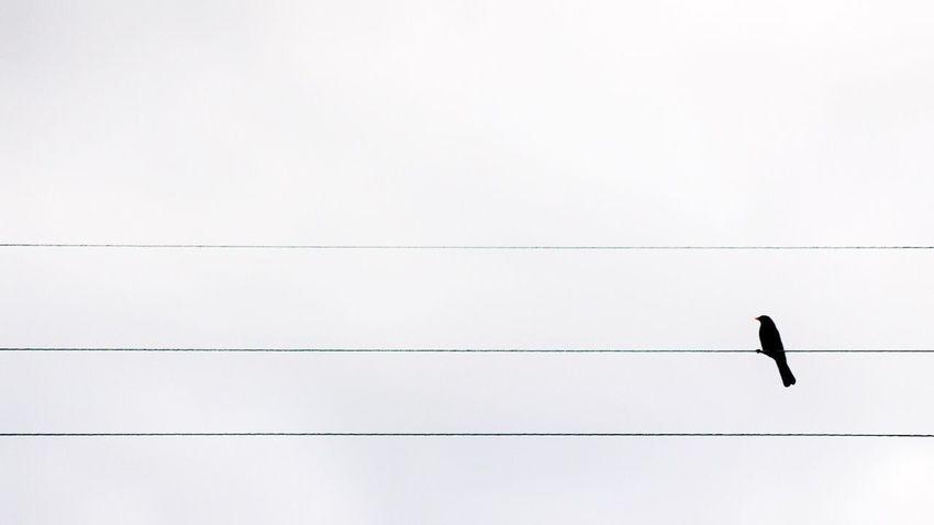 🏡. 📌 Sur le fil 📍 St-Maur des Fossés 📅 24.05.2015_ 📱 #iPhone6S #ProCamera #Skrwt #SnapSeed • IPhone Procamera Skrwt Snapseed • Color Palette Pivotal Ideas •