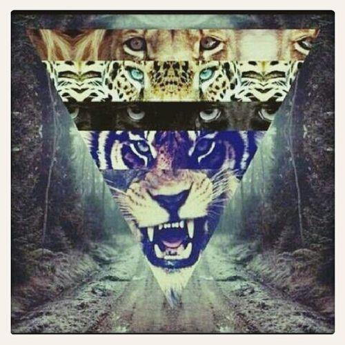 Tiger Eyes Hear Me Roarrrrr!