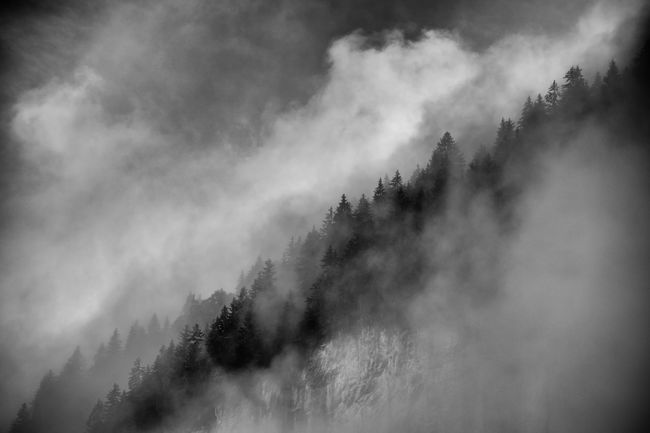 Weather Tranquil Scene Tree Sky Landscape Mountain Fog Mist Misty Cliff Edge Trees Silhouette Black And White Monochrome Dramatic Sky Drama Dramatic Forest Wood Trees Switzerland Jungfrau Berner Oberland Lauterbrunnen