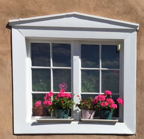 Flower Window Plant Growth Day Fragility Window Box Outdoors Nature Window Sill Building Exterior No People Architecture Pink Color Built Structure Blooming Freshness Flower Head