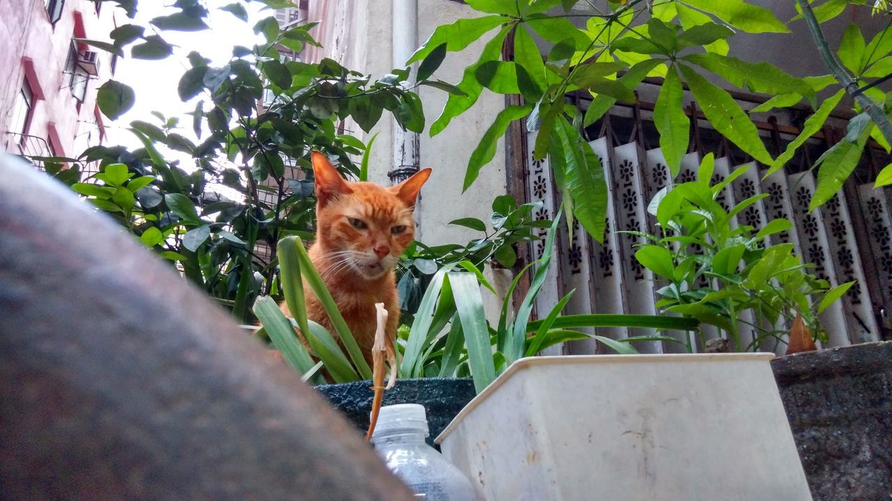 Alertness Animal Animal Head  Animal Themes Architecture Building Exterior Built Structure Carnivora Cat Domestic Animals Domestic Cat Feline Fence Front View House Leaf Looking At Camera Mammal One Animal Peeking Pets Portrait Selective Focus Vertebrate Zoology