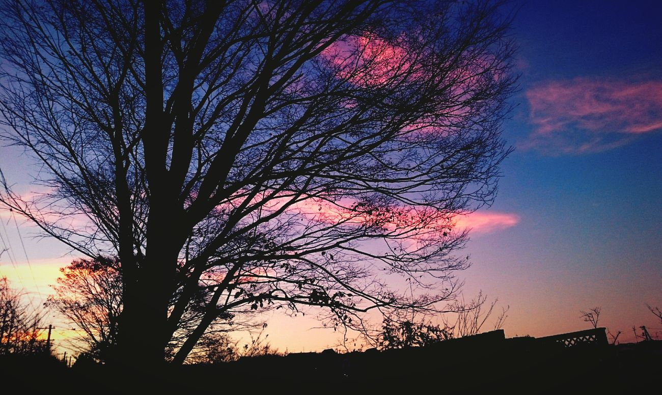 Of the dead tree breathe 枯れ木の息吹き 夕陽 ゆうやけこやけ部 ゆうひーず ゆうひ 自然 Xperiaz2 空 冬空 冬