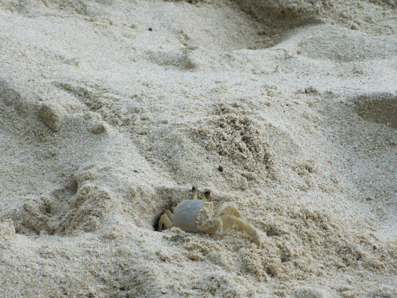 Animal Themes Animal Wildlife Animals In The Wild Crab Nature No People One Animal Outdoors Sand Sea Life