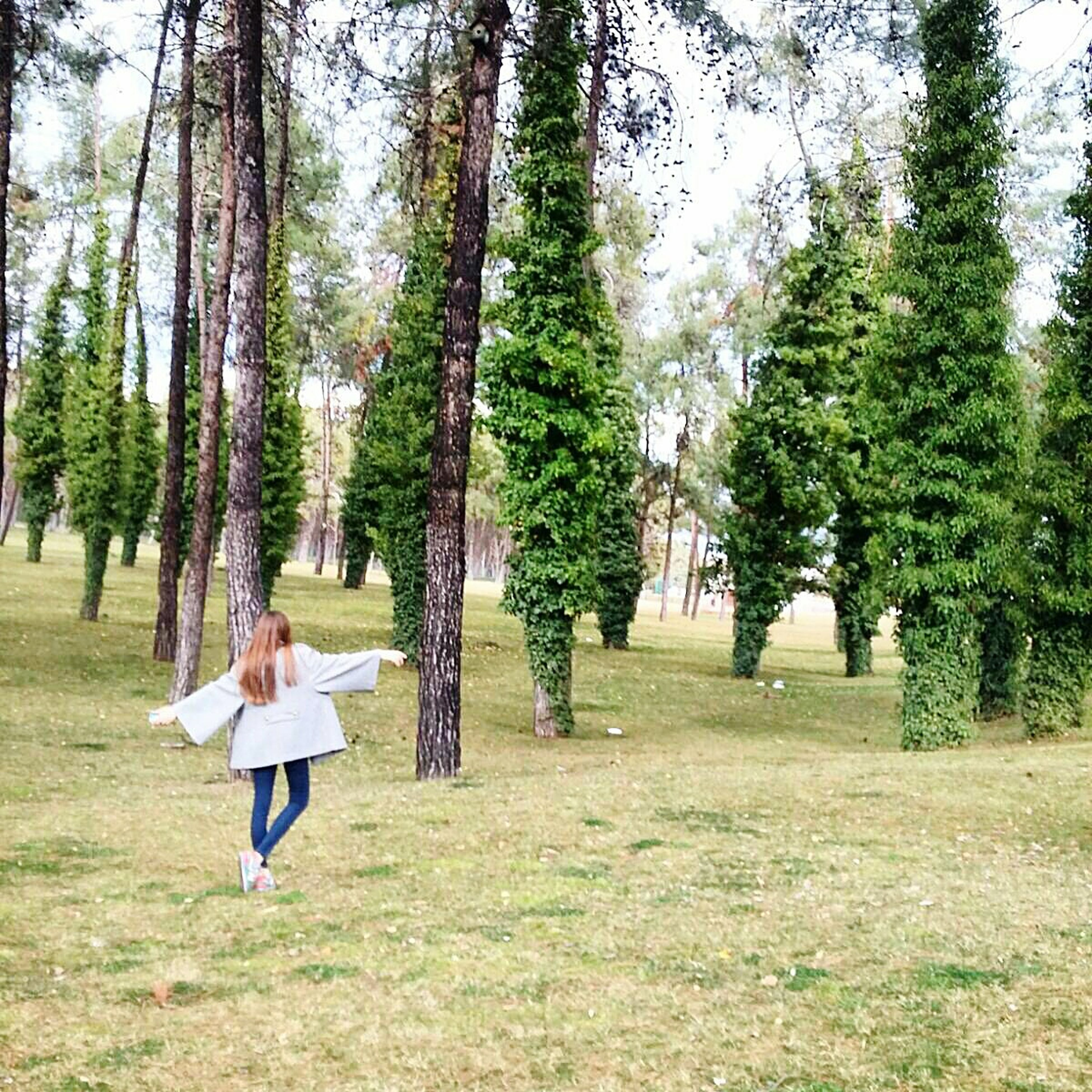 tree, grass, lifestyles, leisure activity, men, person, green color, growth, tree trunk, park - man made space, nature, tranquility, tranquil scene, walking, landscape, field, rear view, beauty in nature