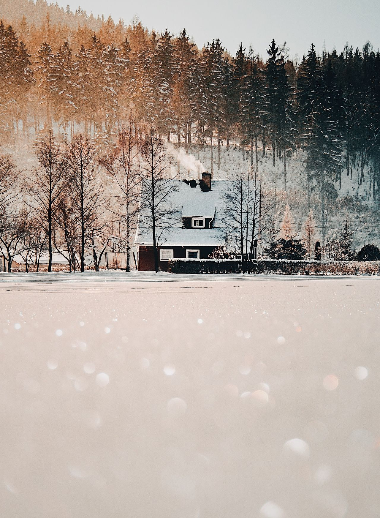 Winter Snow Cold Temperature Tree Bare Tree Nature Weather Frozen Outdoors No People Beauty In Nature Scenics Snowing Bird Day Animal Themes Ice Rink Sky Ice Hockey
