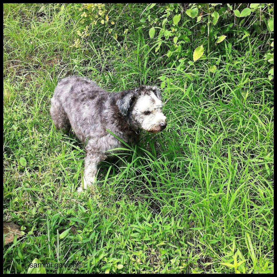 AMPt_community IPhone Camera+ Dogs The Minimals (less Edit Juxt Photography)